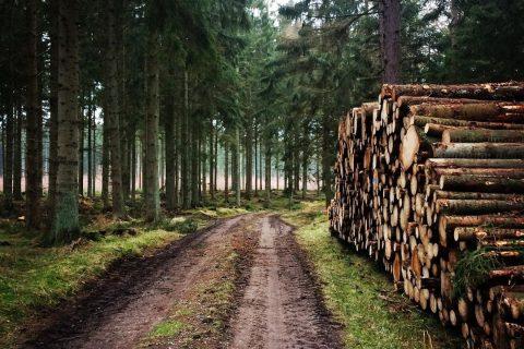 Tisvildevejen: Esrum – Mårum (9 km)