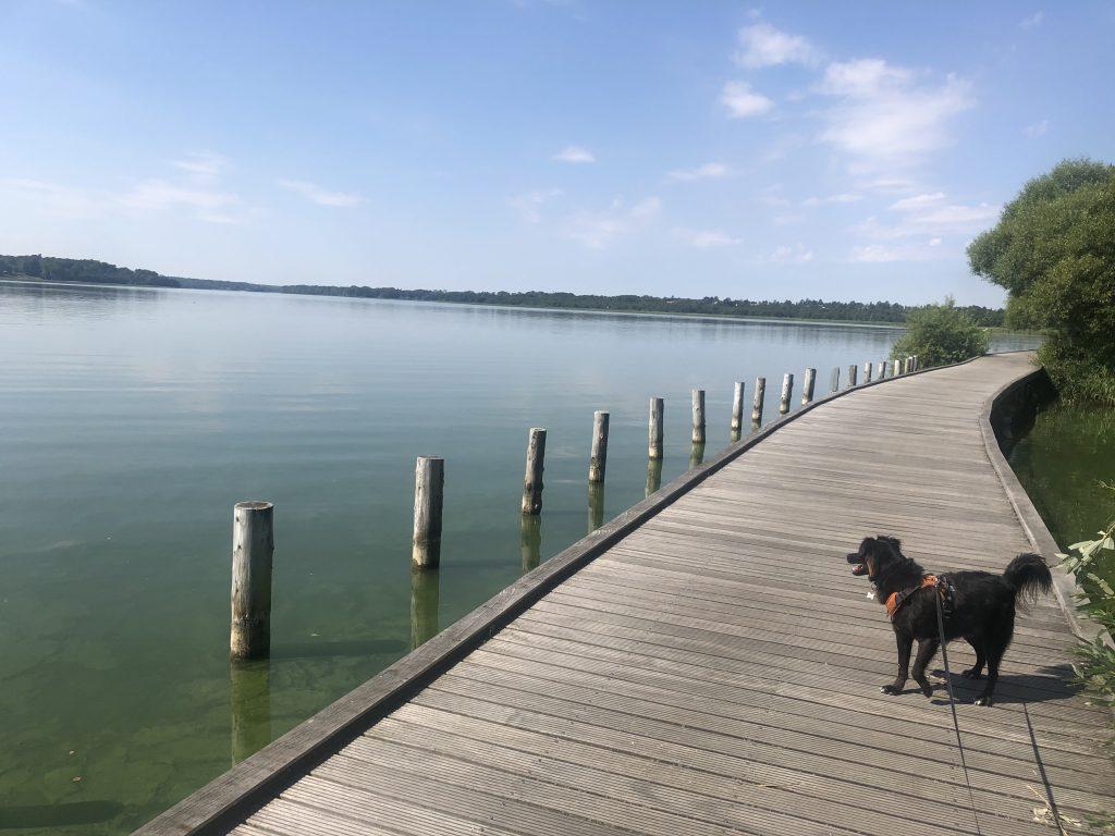 Furesø Rundt med hund